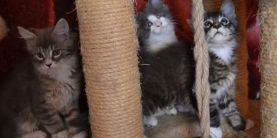 В питомнике есть котята