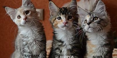 Обновились фото свободных котят помёт